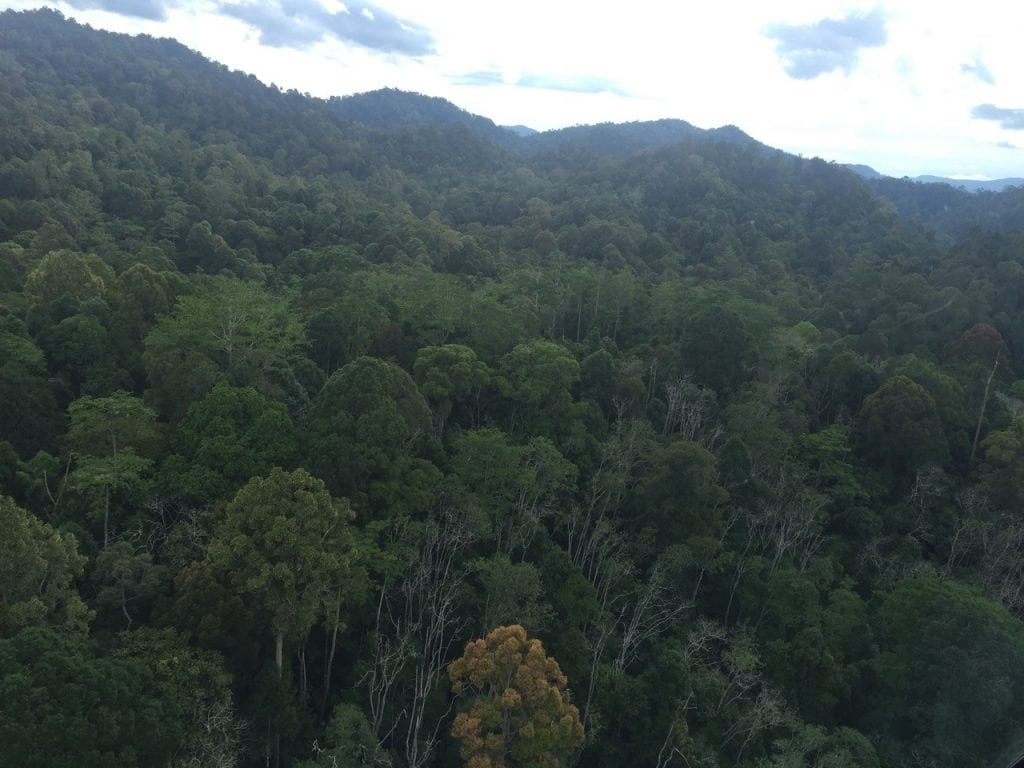 Dipterocarp forest canopy at Danum Valley, Sabah, Malaysia