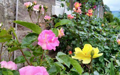 Flowers of One Garden